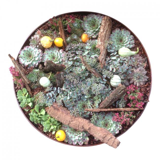 Image of   Plantefad, plantekumme med høj kant Ø60 eller Ø80