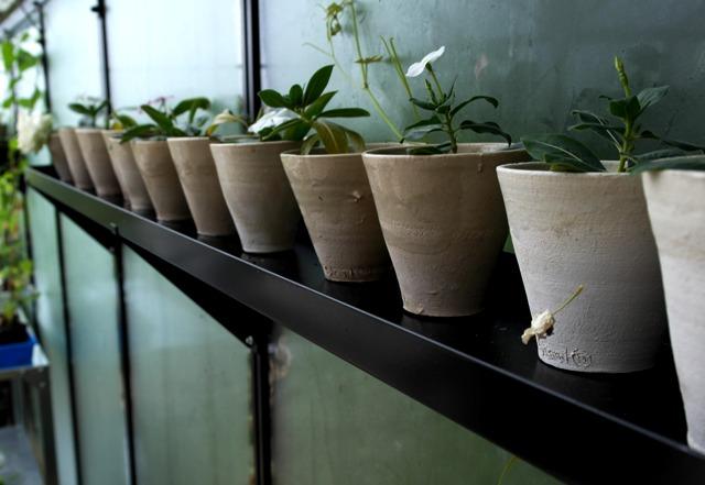 Image of   Drivhushylder Sort pulverlakerede - 6 varianter - højde 3 cm